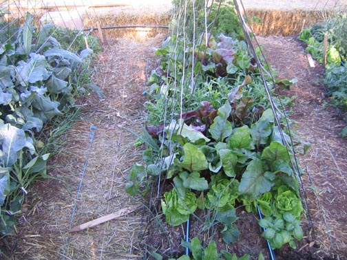 gardening-resources.jpg