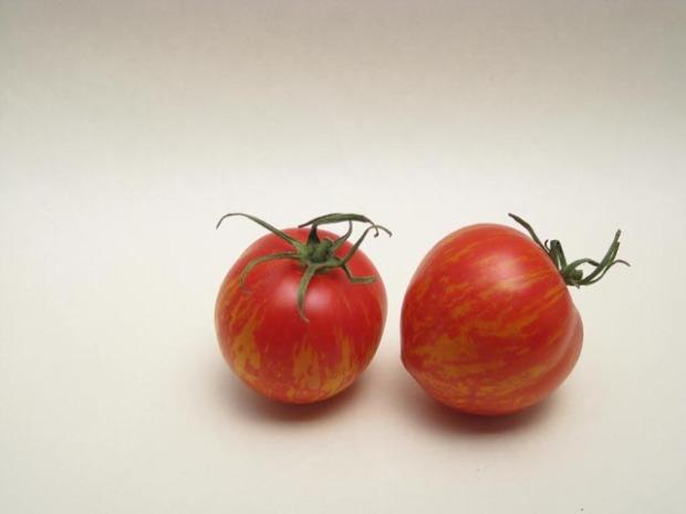 tiger tomato